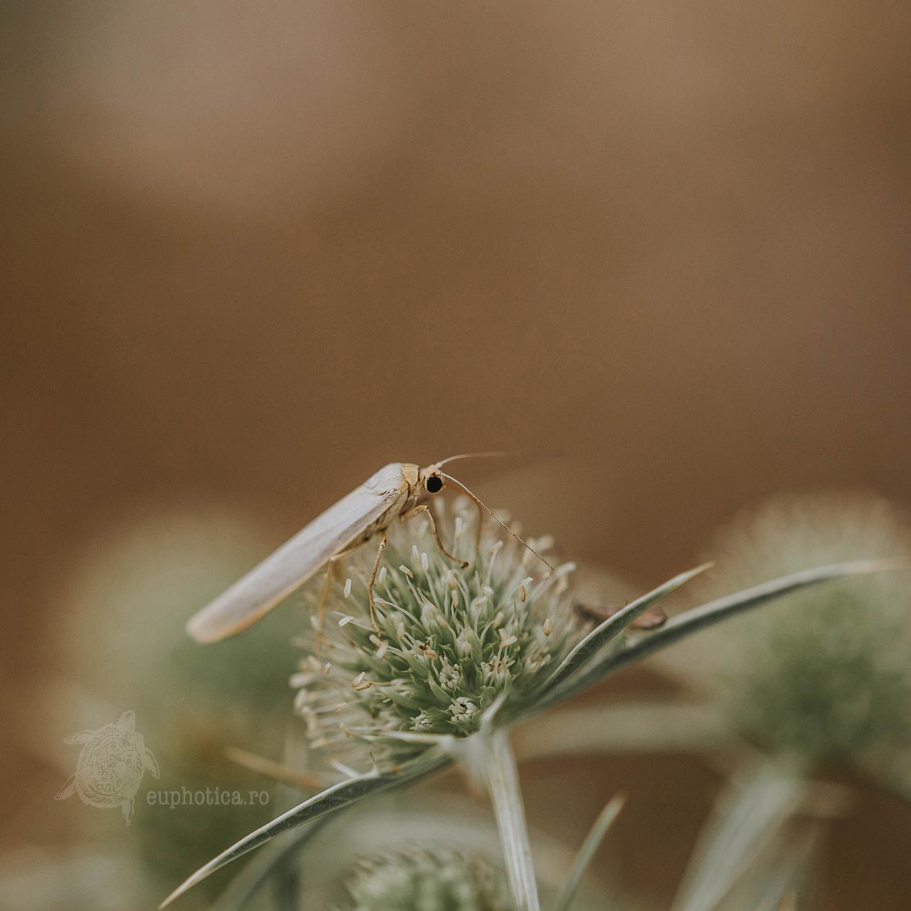 Botanicals and Bugs