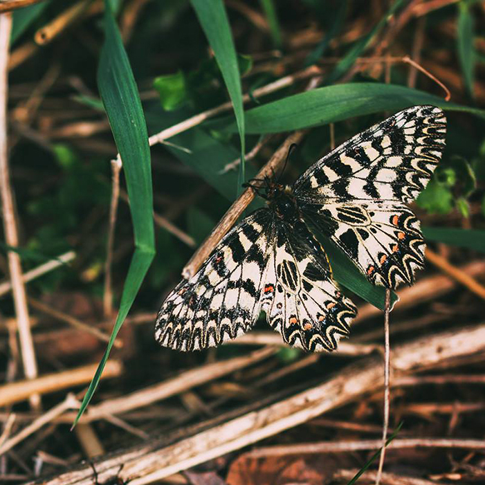Butterfly Inventory